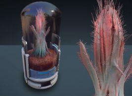 Space Cactus - Kavische